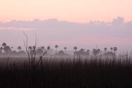 Everglades Sunrise